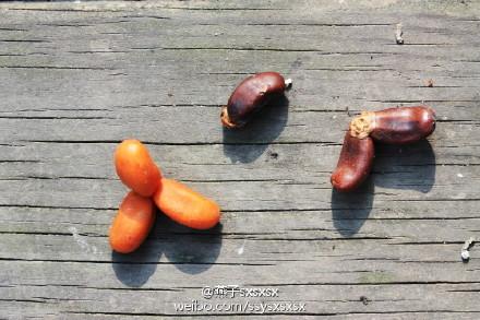 中东海枣果实