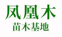 福建凤凰木树苗基地