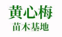 漳州黄心梅球基地