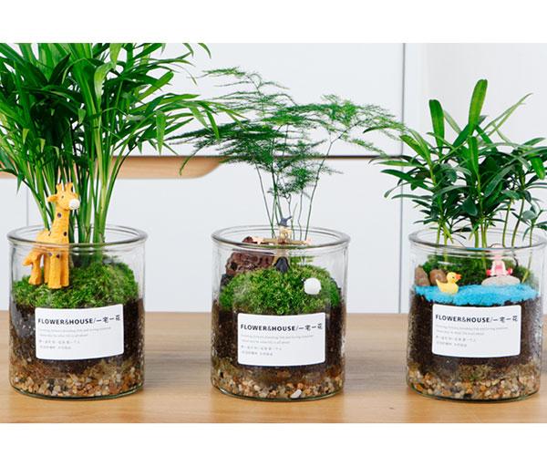 盆栽专用垫底蛭石3