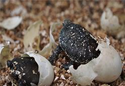 孵化蛭石【龟鳖蛋孵化】