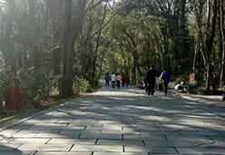 青石板铺设公园人行道