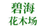 漳浦县长桥镇碧海花木场